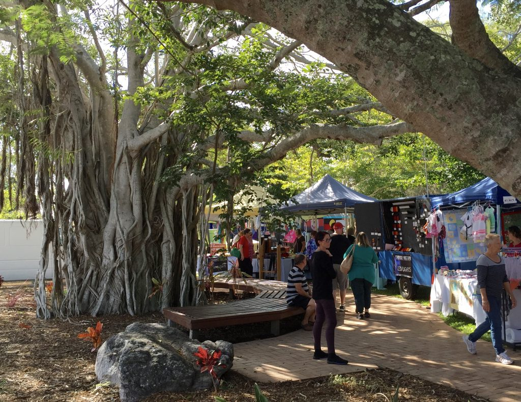 Moreton Bay fig tree at the markets