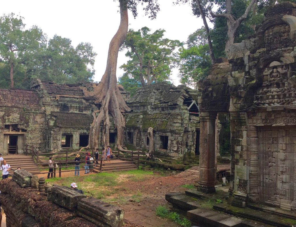 Ta Prohm trees.